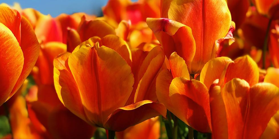 Entering Spring:  Explore the Sacral Chakra