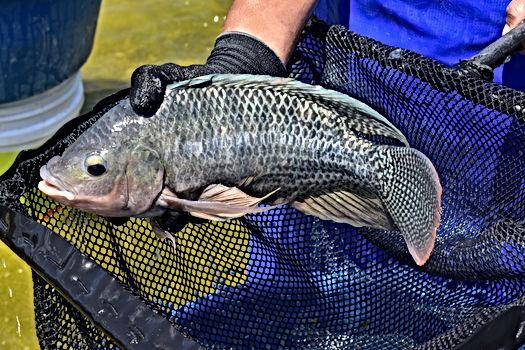 English For Fisheries & Aquaria