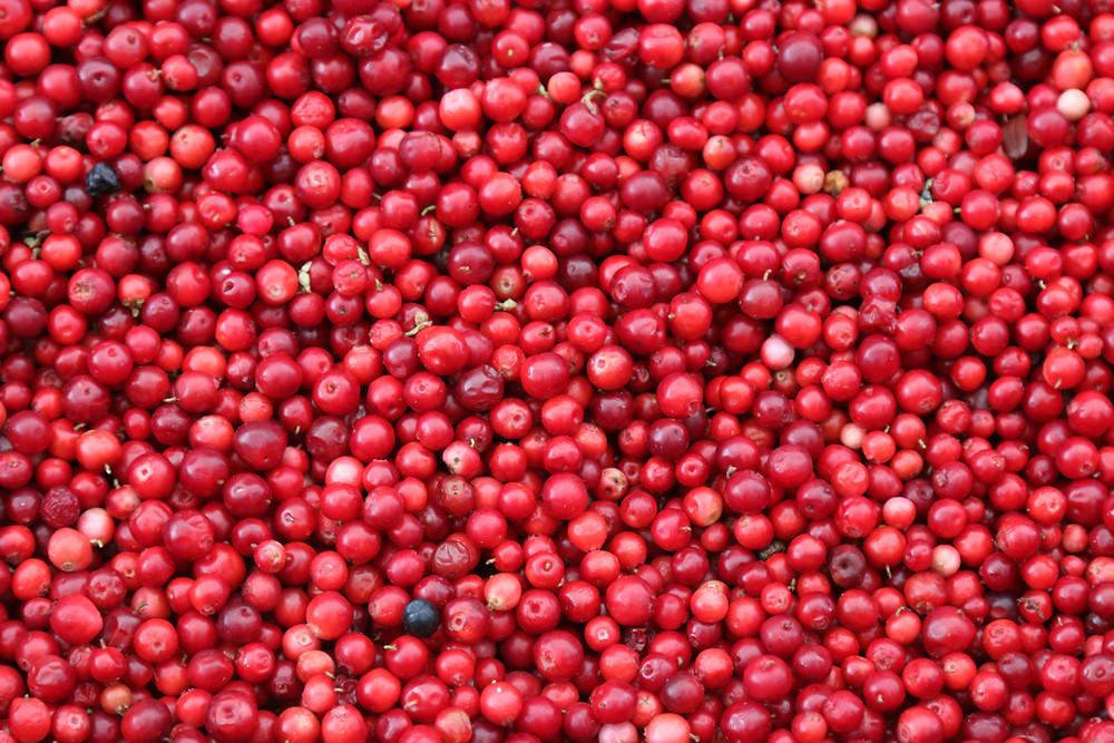 Sacred Plant Co Goji Berry Seeds