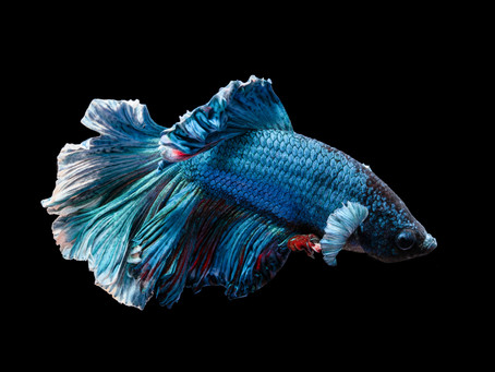 Freshwater Fish 9/14