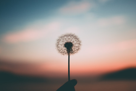 If you had ONE Wish...
