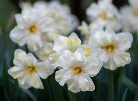 So God Made a Flower Farmer