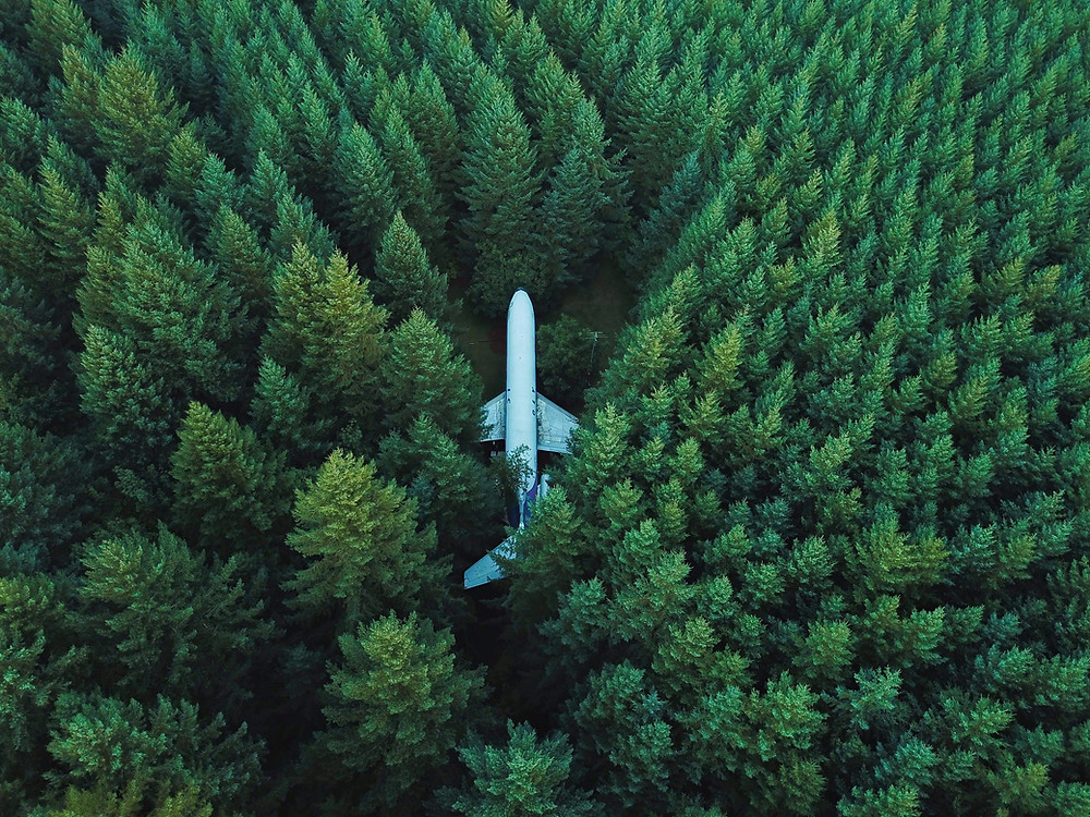 A plane in the middle of a forrest