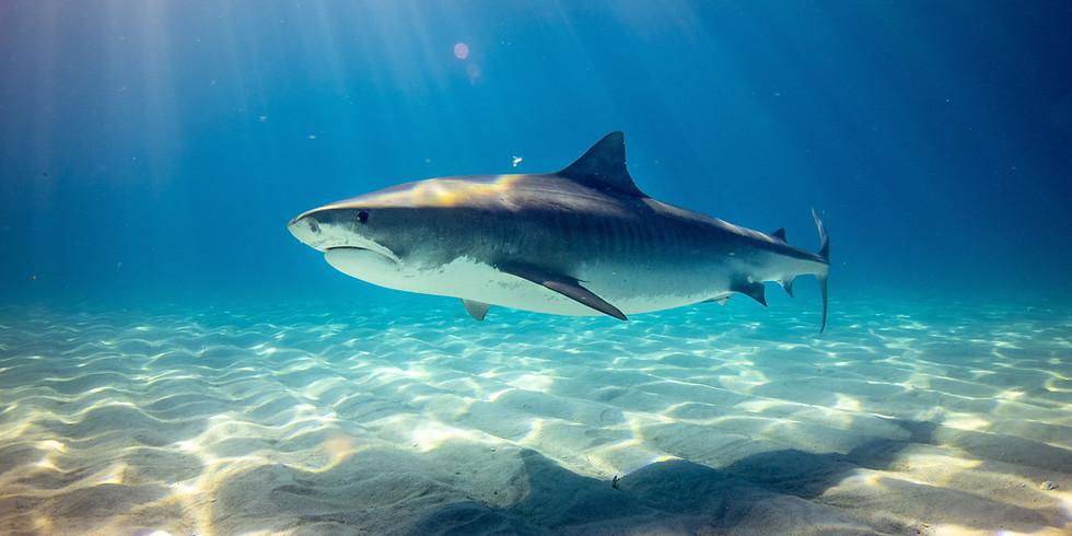 Shark Ecology Lab