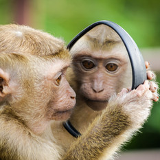 Learn about macaques