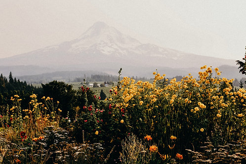 All Perennial Wildflower Mix