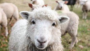 Promoting Australia's wool growing credentials to the world