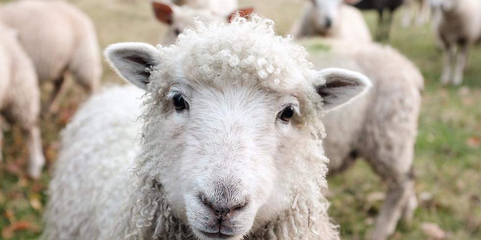 動物の色んな言葉や文字の音を学ぼう パート1 (10-12歳向け) 【Stew】