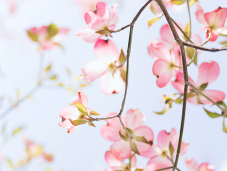 Spring Inspirations For Your Customers