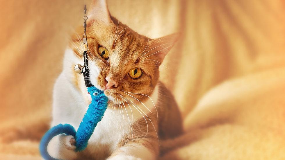 Introduction au comportement du chat