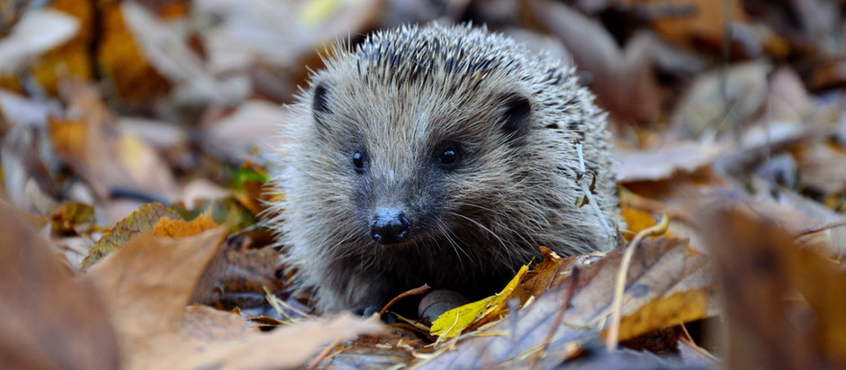 How to Turn Your Garden into a Wildlife Haven