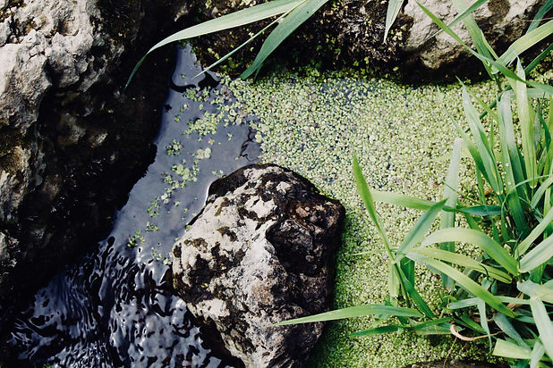Duckweed, aquatic weed and algae control in Canada's ponds, lagoons and reservoirs