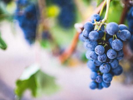BIODYNAMIC WINES - Next Level Organic Wine Making