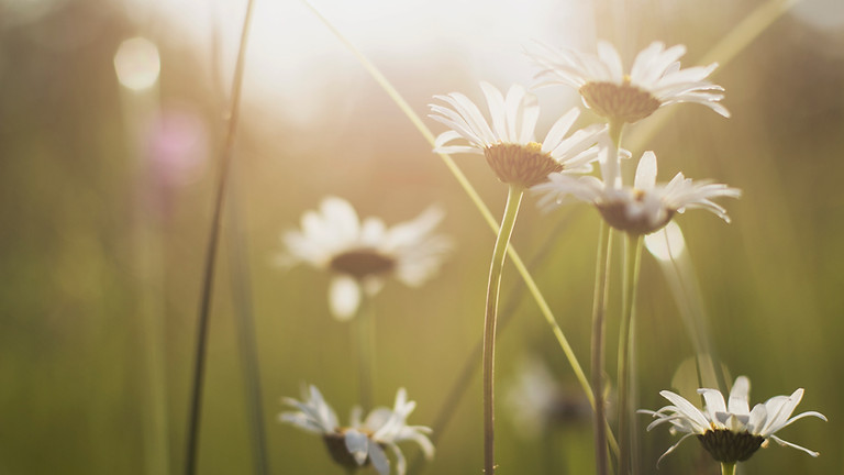 Native Wildflower Planting