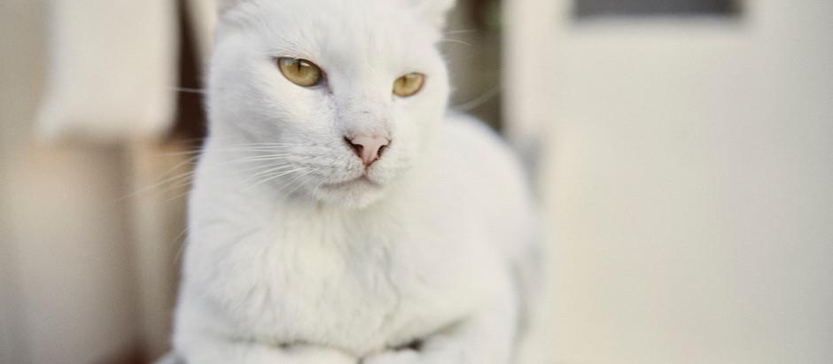 Frage 155: Meine Katzen sind unantastbar