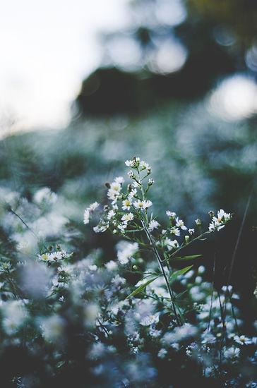 Image by Hannah Bruckner