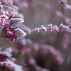 WEERBERICHT: Fris weekend, maandag kans op smeltende sneeuw