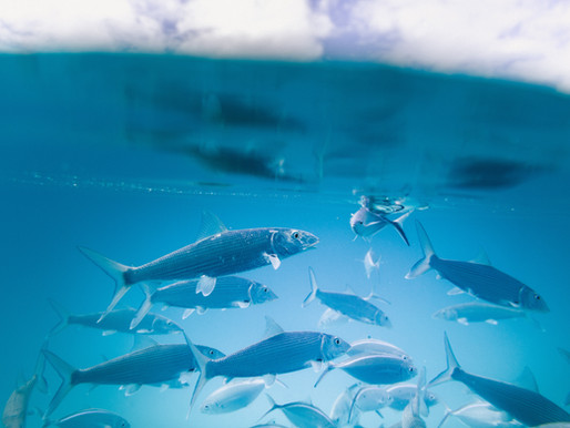 Calendrier des saisons pour le poisson