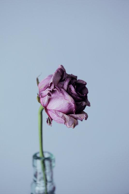 Image by Sharon McCutcheon
