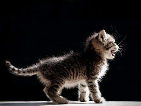 Cat Lovers Wajib Tahu! Inilah Berbagai Penyebab Kucing Muntah Dan Cara Mengatasinya!