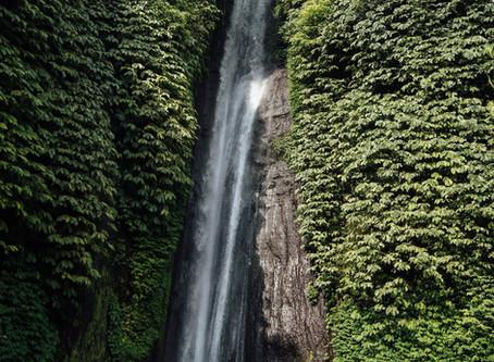 Amazing Amazon Rainforest