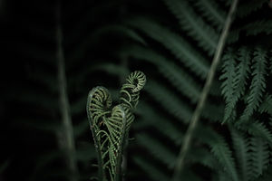 Just like a fern, counselling helps you unfurl your issues.