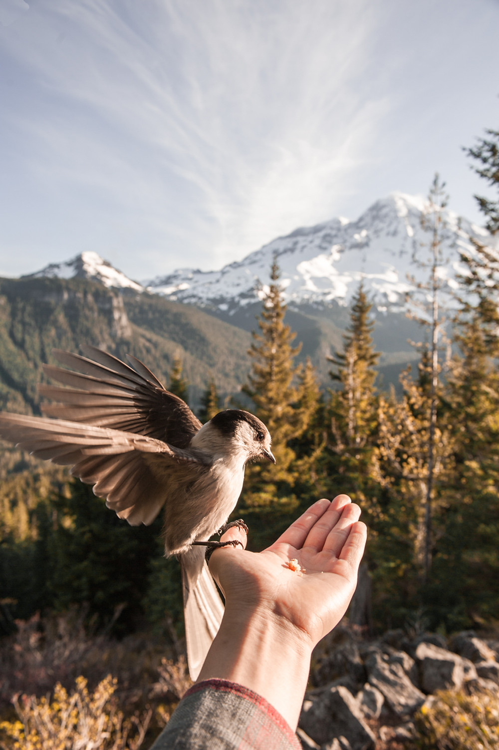 a bird sitting on a person's hand