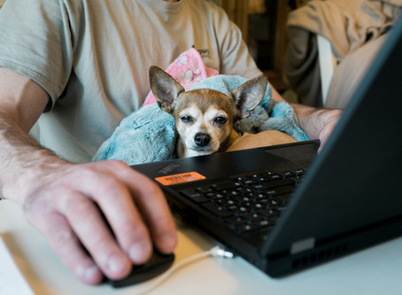 Social Media & Your Dog Business