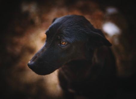 Voor veel honden begint de hel pas na de quarantaine, zo voorkom je het