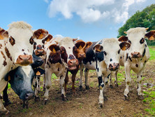 Summer heat, pasture management and herd health