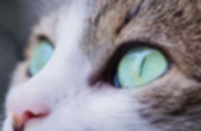 Shimmer Pet Care - Cat Sitting