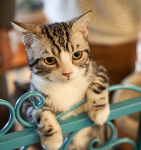 The Cat Method in Life: Focus Tips Only This Pet Can Teach You