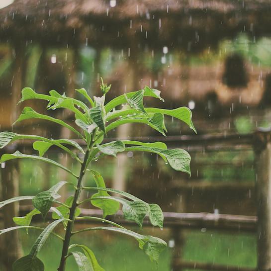 Nog tot volgende week dinsdag frisjes en regelmatig regen