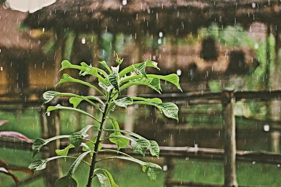 WEERBERICHT: Meestal wisselend bewolkt met kans op buien