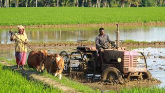 FARM BILLS 2020