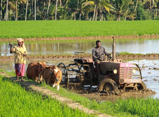 Siaran Pers | Pentingnya Meningkatkan Peran Petani dalam Rantai Pasok Beras