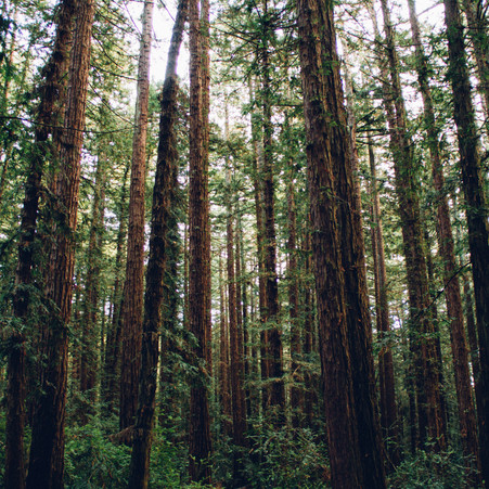 March Membership Meeting--Timber Tax Issues                     by Ruth Kistler