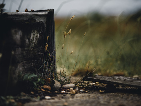 Öykü- Hacer Aktaş- Arka Bahçe