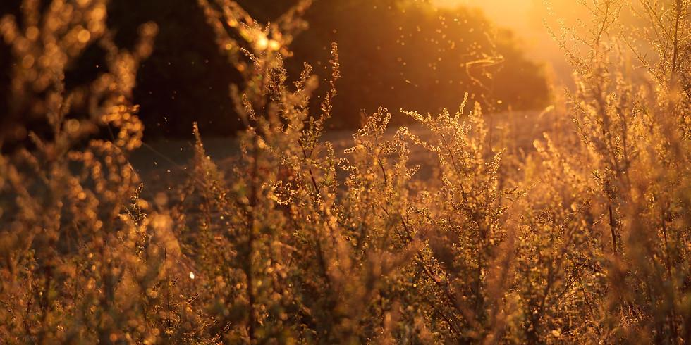 November 11th ~ Golden Light Energy Meditation