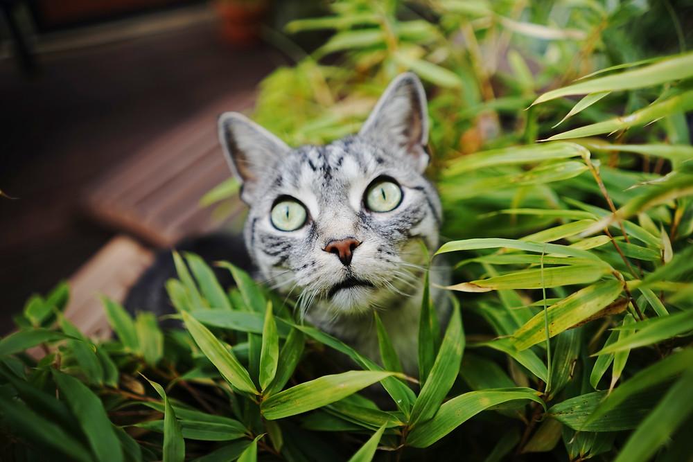 Darum essen Katzen Gras