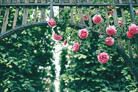 Open Gardens @ Bob Melville's Rose Garden