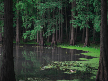 Tallahassee Attractions: Apalachicola National Forest