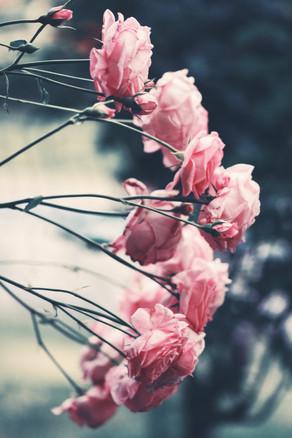 Image by Alina Sofia