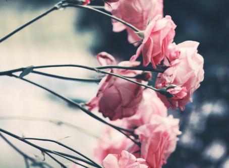 Im Namen der Rose.