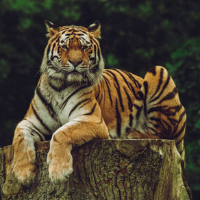 What the Netflix Series Tiger King Can Teach You About Estate Planning-Part 2