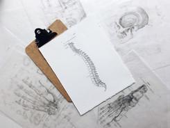 Occupational musculoskeletal disorders in chiropractors