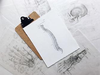 spinal illustration