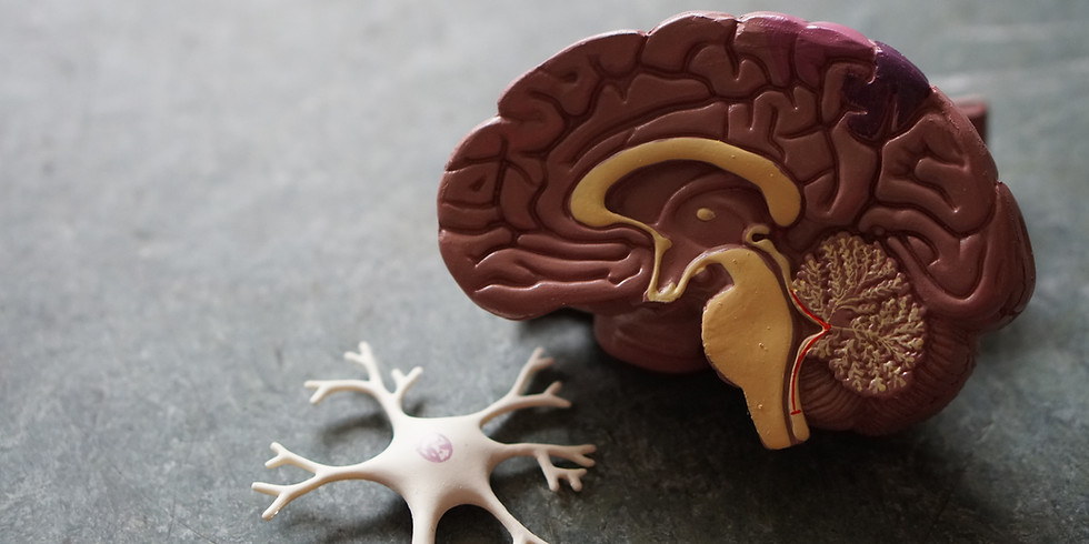 Straight Talk about The Aging Brain