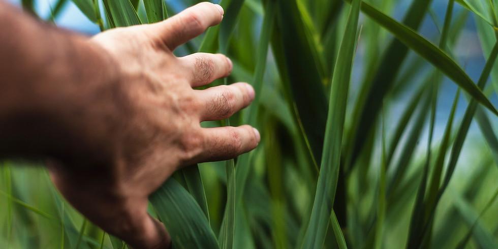 Tzimtzum for Farmers: Stewarding Land with Humility