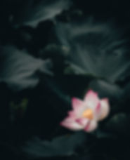 Image de Clarence E. Hsu